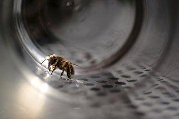 une abeille sur Birgitte Bergman