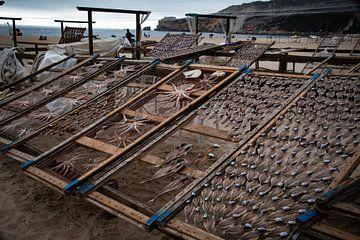 Vangst van de dag van Bliek Fotografie