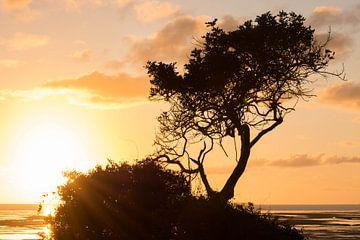 Landschap Australië van Jouke Wijnstra Fotografie