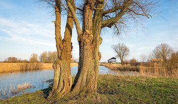 Dikke bomen op de voorgrond van een waterrijk Nederlands landschap van Ruud Morijn