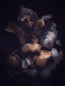 Dried Petals van