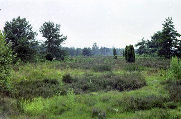 Grün ist die Heide van Joachim Serger