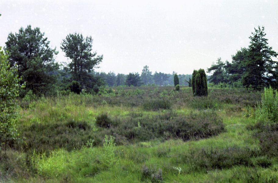 Grün ist die Heide