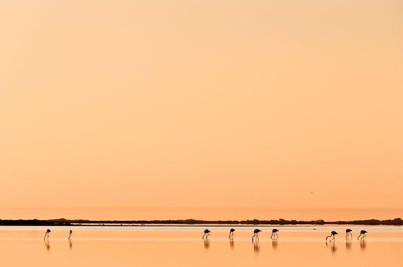 Flamingo'e in de Camargue van Tom Elst