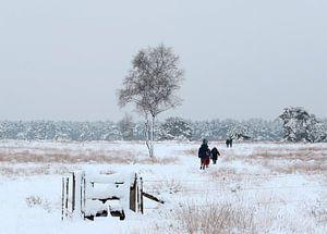 Sneeuwlandschap Breeveen