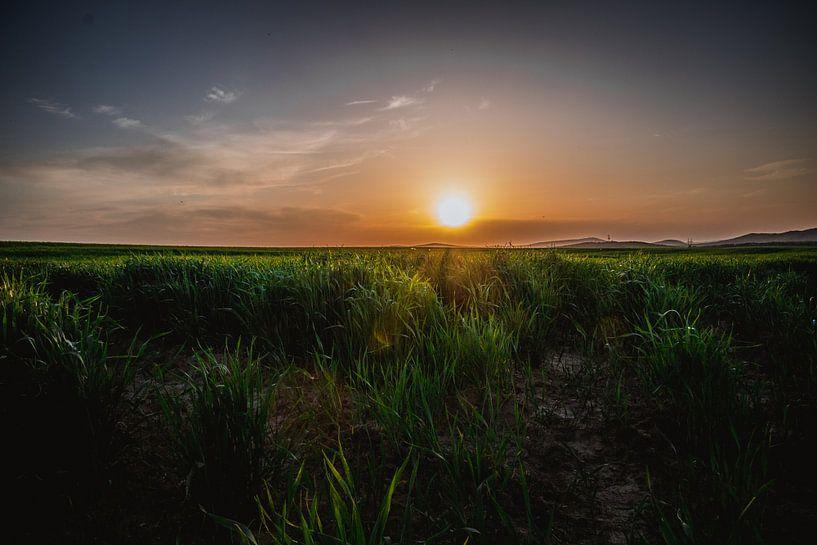 Zonsondergang bij het groene gras van Koop je Canvas