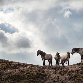 Wilde Pferde von Wendy Bos