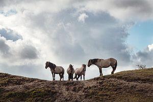 Wilde Paarden van Wendy Bos