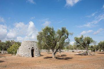Olijfboomgaard in Zuid-Italie von Yvonne van der Meij
