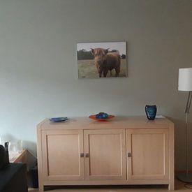 Kundenfoto: Scottish highlander cow von Rick Van der bijl