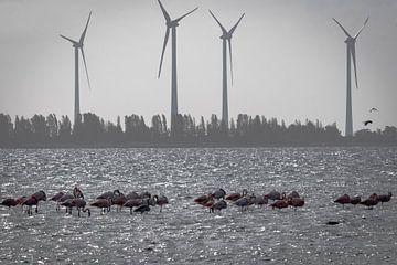 Flamingos in den Niederlanden (Zeeland) von Danny de Jong