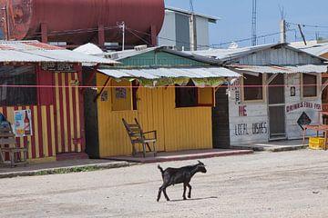 Geit in Black River (Jamaica) van t.ART
