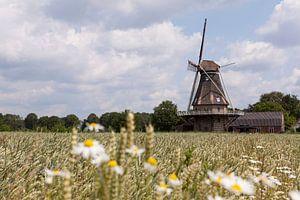 Korenmolen in Veldhoven