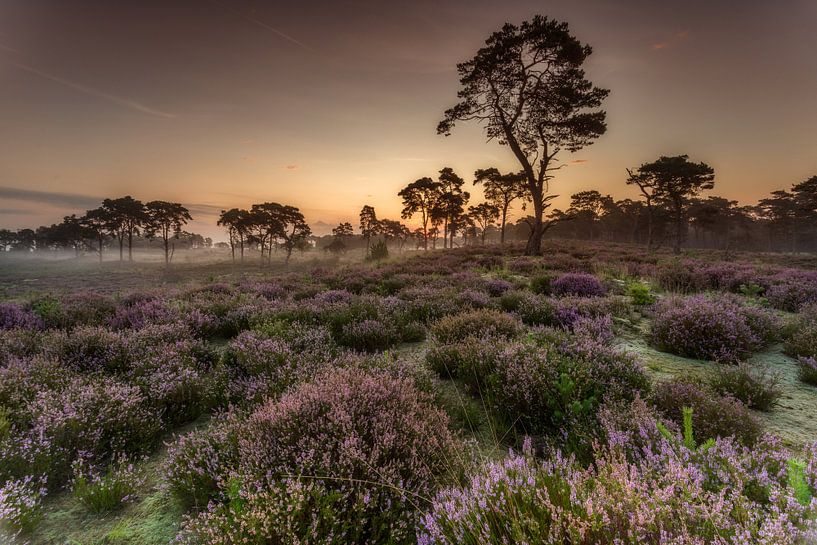 Zonsopgang Kalmthoutse Heide van Tom Opdebeeck