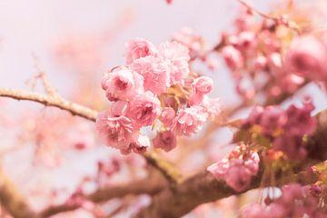 Blume ; Blüte von Coby Zwartbol