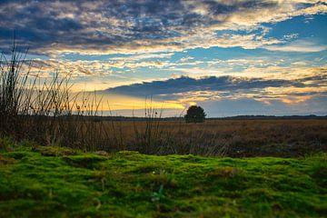 Veluwe landschap tijdens zonsondergang van Bart Nikkels