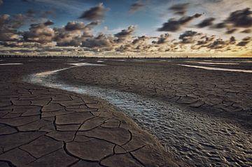 Het woestijnwad von Remco de Vries