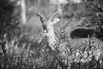 Hidden impala van Suzy den Engelse