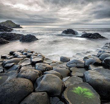 Giantes Causeway in Nordirland von Dieter Meyrl