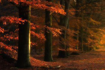 Herfst kleuren in de bossen bij Gasselte, The Netherlands van Bas Meelker