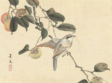 Vogel und Khaki von Matsumura Keibun - 1892