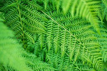 Green fern von Arkadiusz Kurnicki