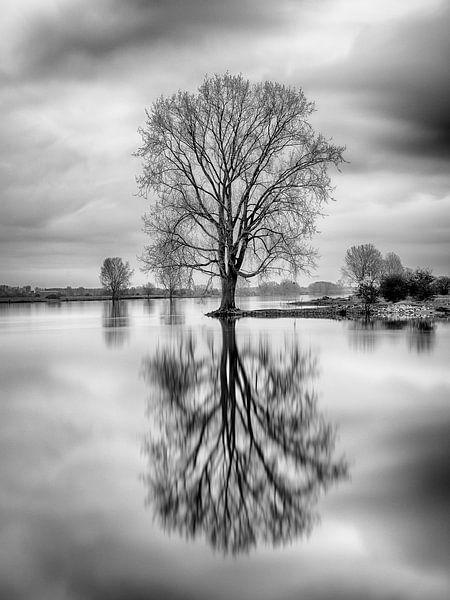 Spiegelbeeld van Mark Bolijn