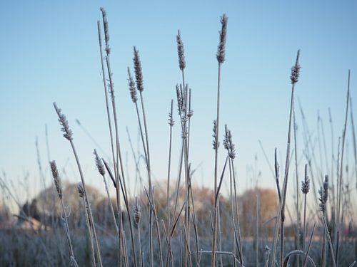 Bevroren veld
