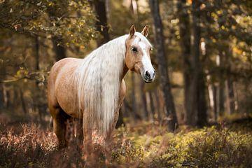 Quarter Horse im Herbst von Lotte van Alderen