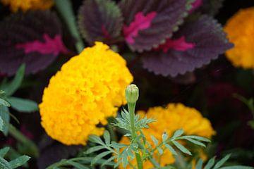 gele plant van Bart Cornelis de Groot