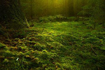 Mos op de bodem van een bos van Hugo Braun