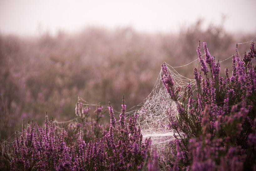 Spinnenweb op de paarse heide van Milou Oomens