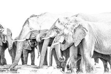 Elefanten am Wasserloch von Robert Styppa
