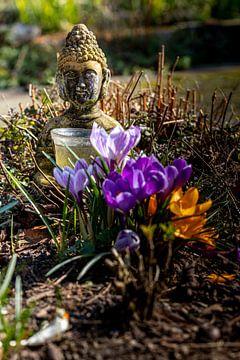 boeddha van leon brouwer