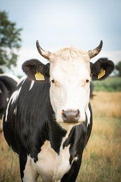 Koe in weiland van Kashja Neels