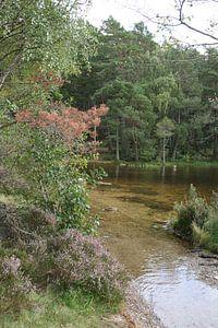 Klares Wasser im Wald