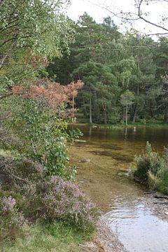 Klares Wasser im Wald von Floortje Mink