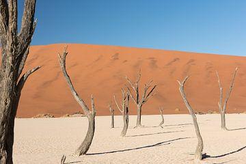 Bomen in Deadvlei van Felix Sedney