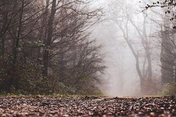 bodem van het mistige bos van Tania Perneel
