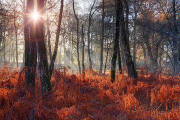 Zonnige ochtend in het bos met rode varens van