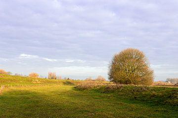 landschap met boom van Bernadet Gribnau