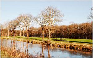 Mooie natuur in Drenthe van