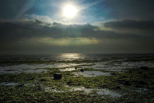 De Schorren - Texel