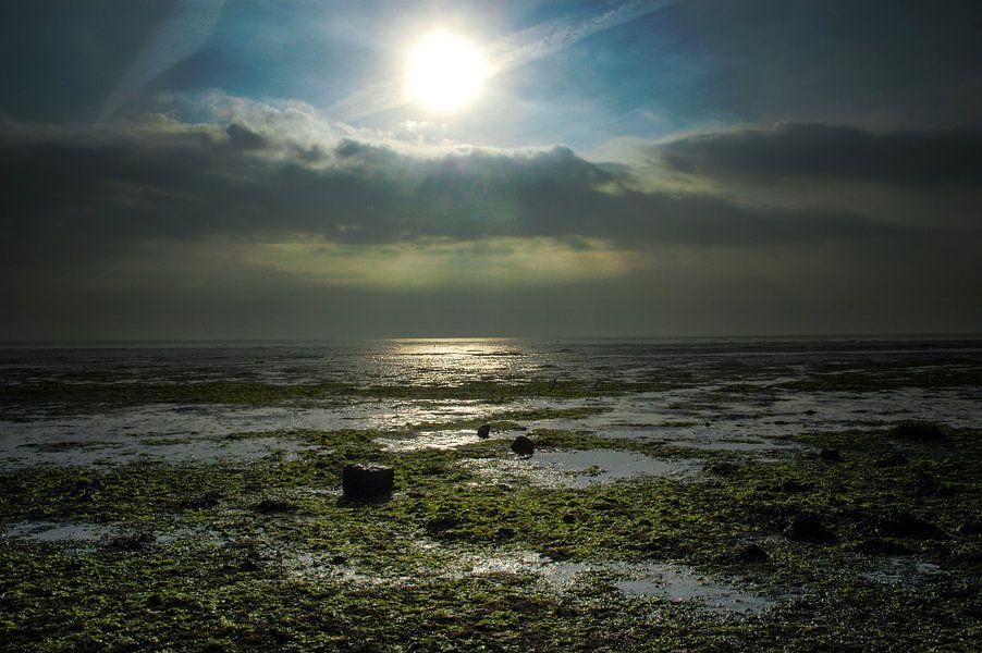De Schorren - Texel van Stefan Witte