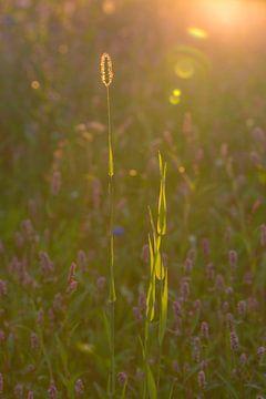 Sonne der wilden Blumen morgens von Ans Bastiaanssen