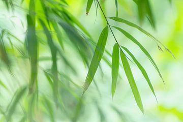 Bambus von Birgitte Bergman