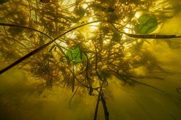 Onderwater landschap van Matthijs de Vos