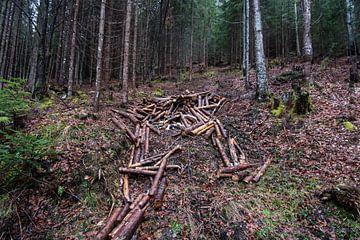 Bomen in het bos von Marco Bakker