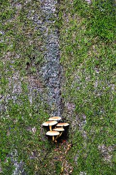 Paddestoelen op boomstam van Johan Zwarthoed