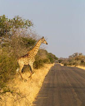 Giraf (1) van